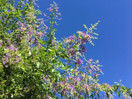 Blue ble sky